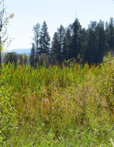 LandownerCollaboration - OHA-OkanoganHighlandsAlliance-Restoration-LandownerSupport-LeesWetlandClose.jpg