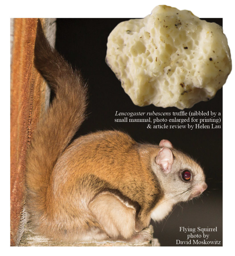 Flying squirrels help the forests they live in!
